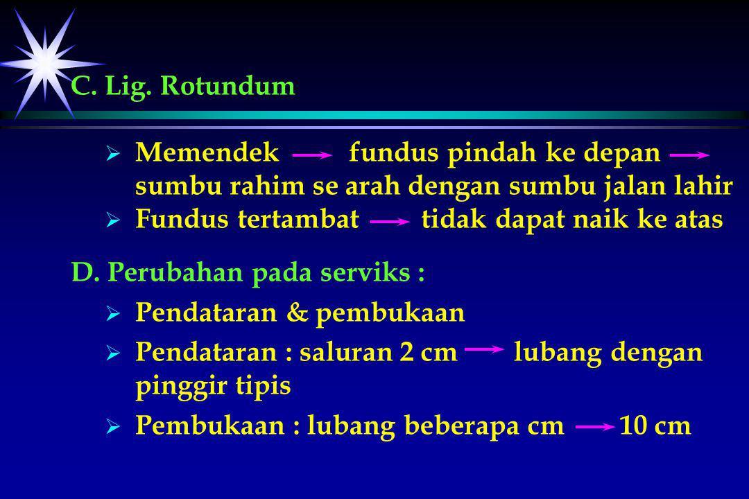 C. Lig. Rotundum Memendek fundus pindah ke depan sumbu rahim se arah dengan sumbu jalan lahir.