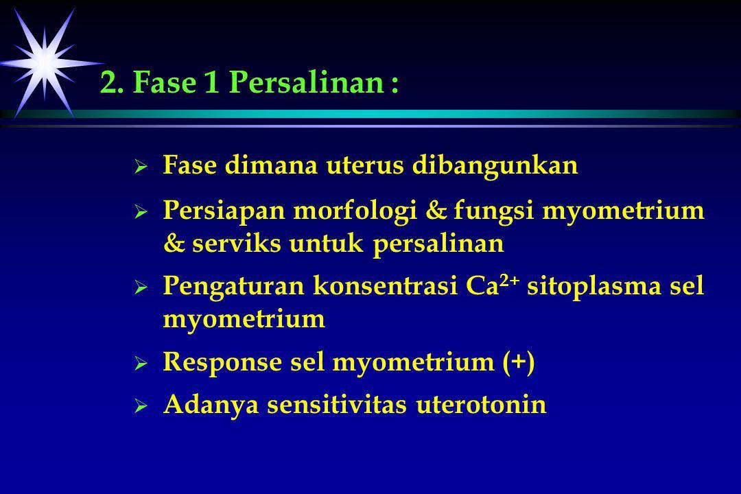 2. Fase 1 Persalinan : Fase dimana uterus dibangunkan