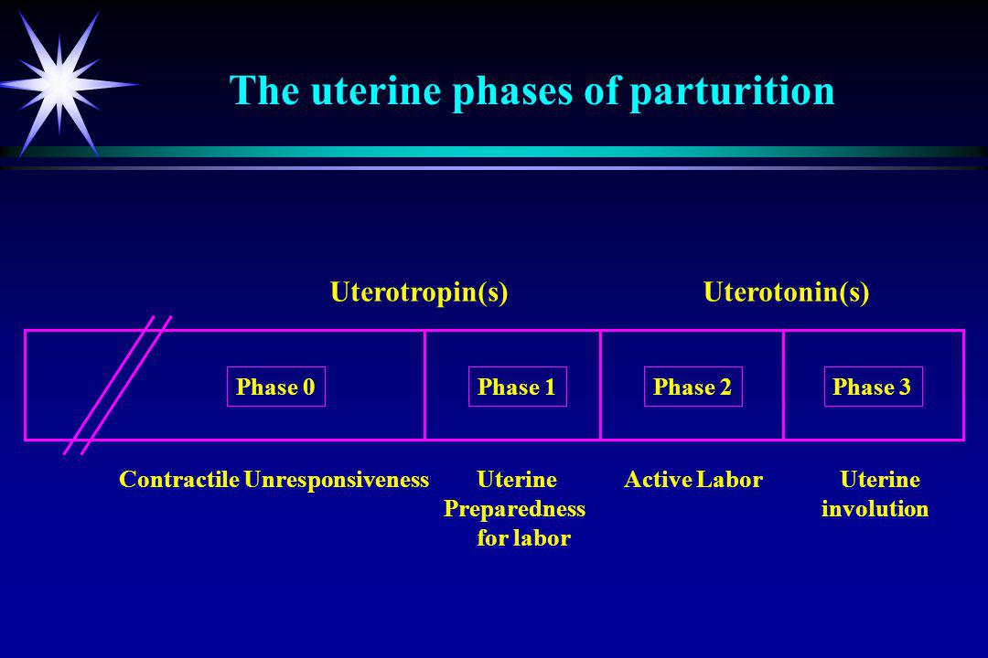 The uterine phases of parturition