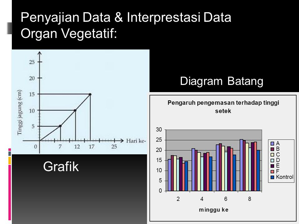 Penyajian Data & Interprestasi Data Organ Vegetatif: