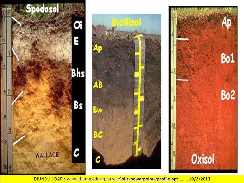 DIUNDUH DARI: www. d. umn. edu/~pfarrell/Soils/powerpoints/profile