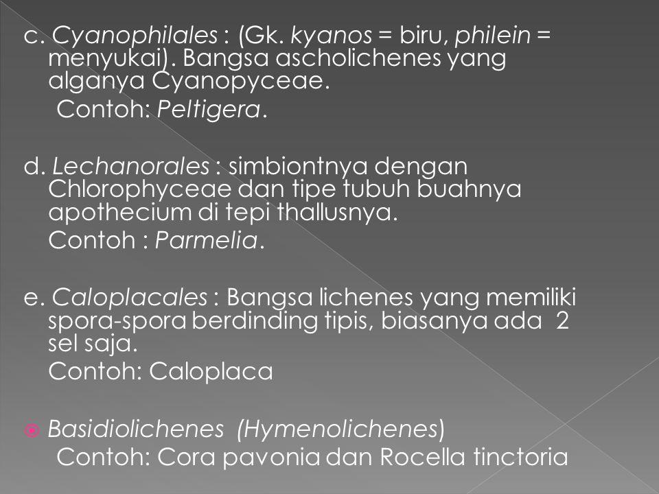 c. Cyanophilales : (Gk. kyanos = biru, philein = menyukai)
