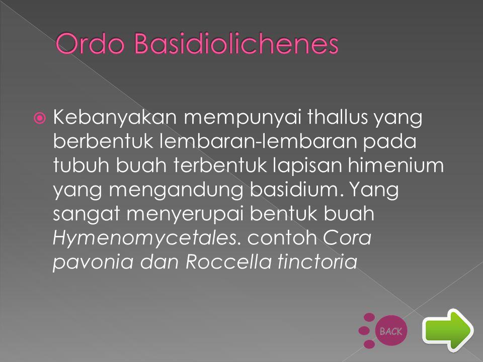 Ordo Basidiolichenes
