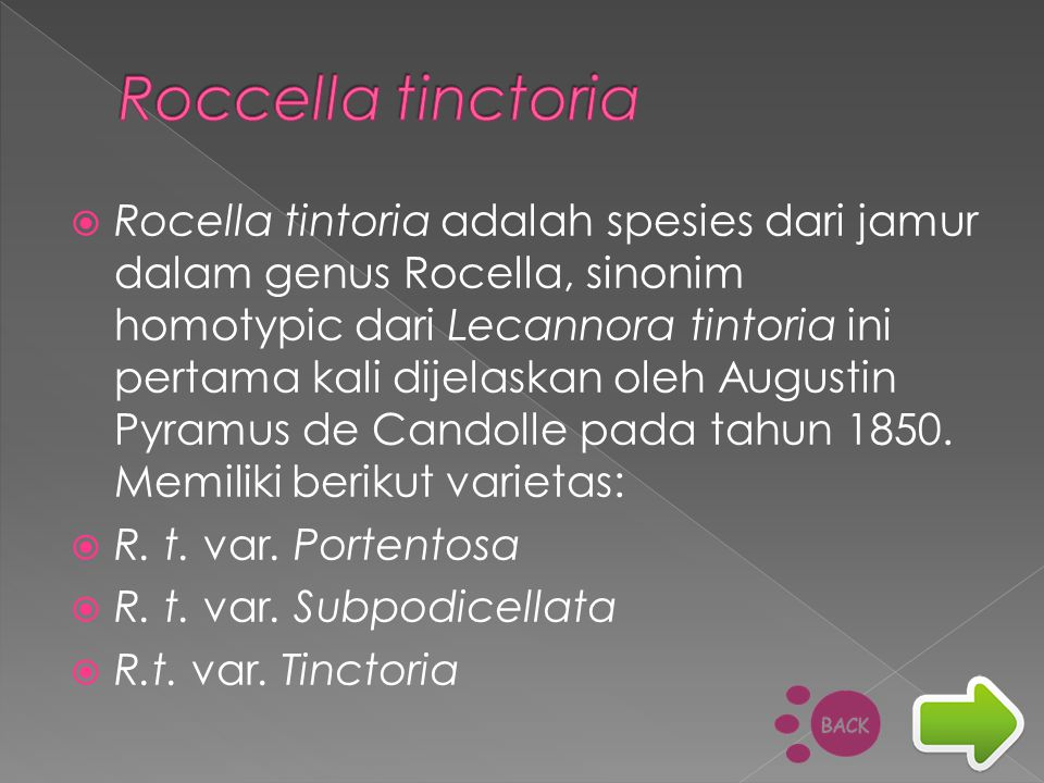 Roccella tinctoria
