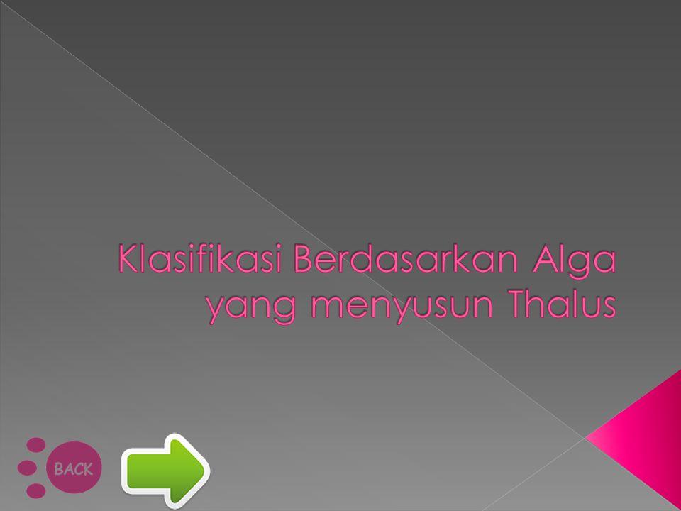 Klasifikasi Berdasarkan Alga yang menyusun Thalus