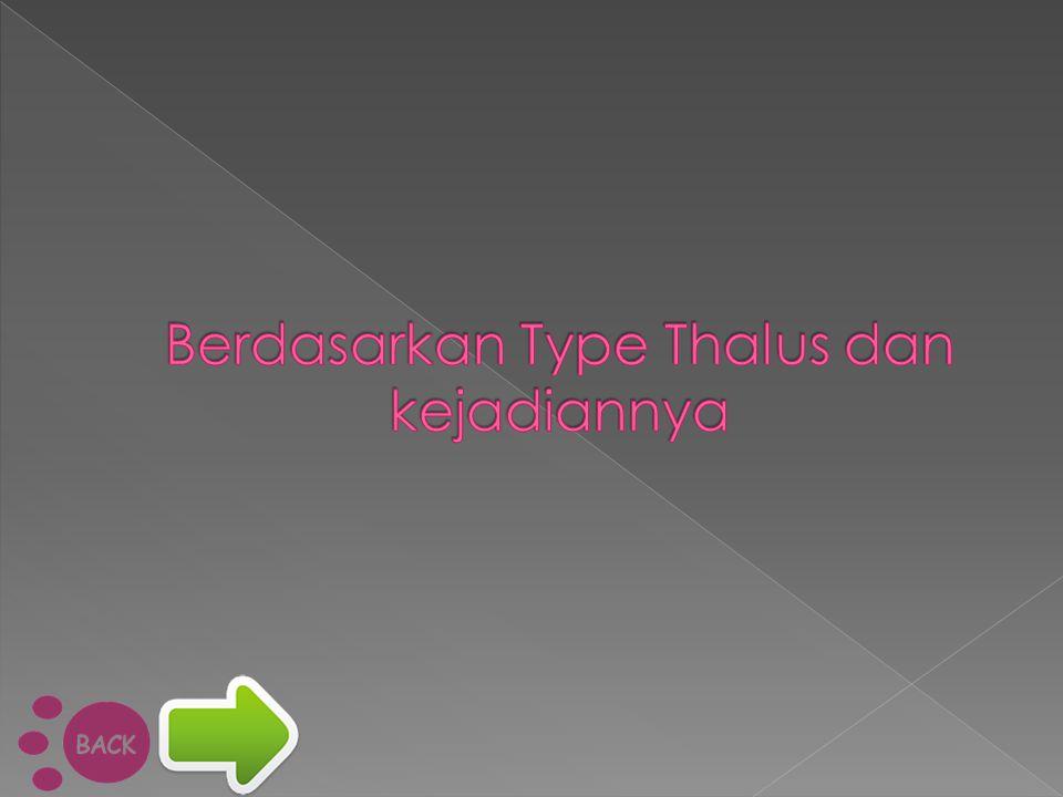 Berdasarkan Type Thalus dan kejadiannya