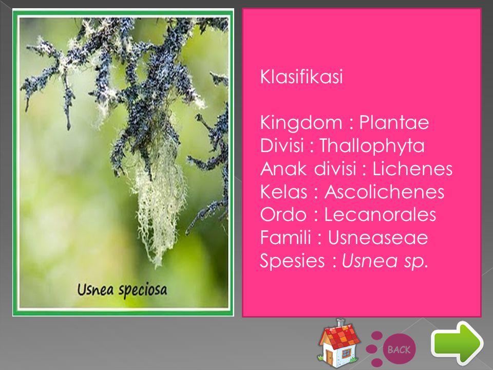 Klasifikasi Kingdom : Plantae. Divisi : Thallophyta. Anak divisi : Lichenes. Kelas : Ascolichenes.