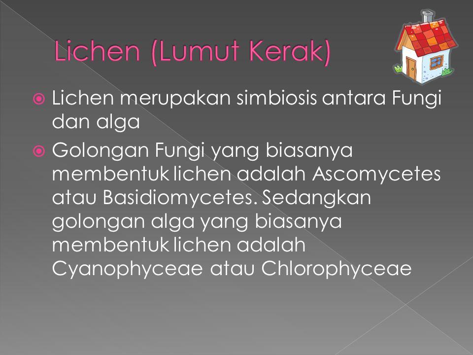 Lichen (Lumut Kerak) Lichen merupakan simbiosis antara Fungi dan alga