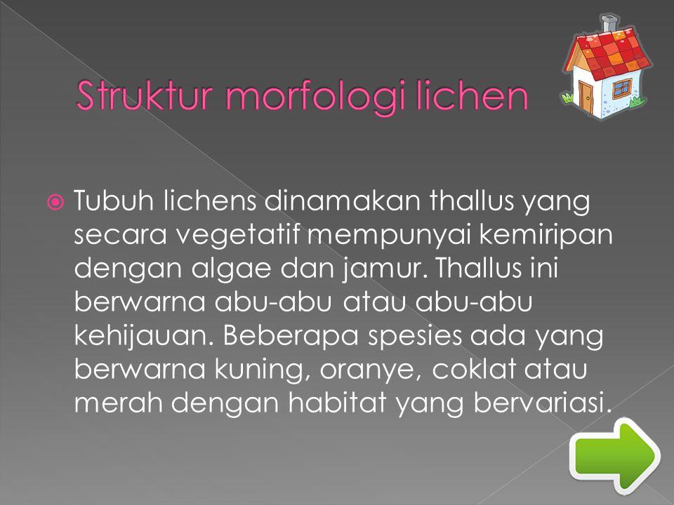 Struktur morfologi lichen