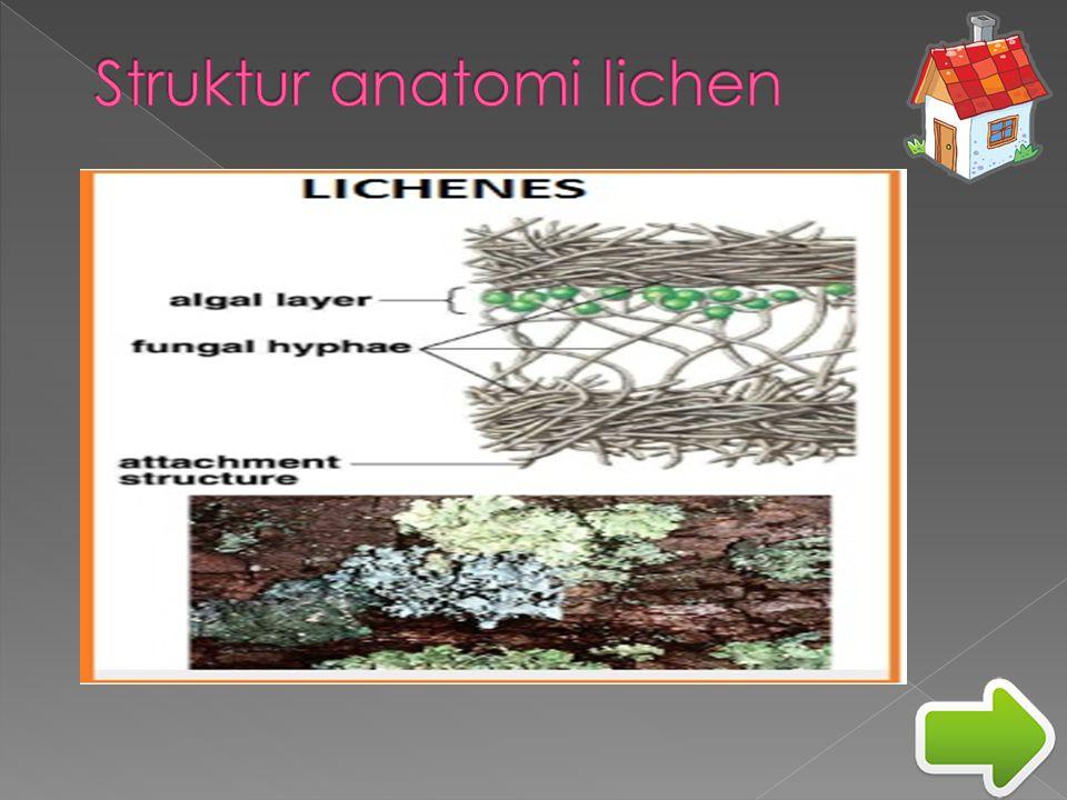 Struktur anatomi lichen