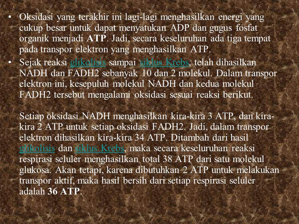 Oksidasi yang terakhir ini lagi-lagi menghasilkan energi yang cukup besar untuk dapat menyatukan ADP dan gugus fosfat organik menjadi ATP. Jadi, secara keseluruhan ada tiga tempat pada transpor elektron yang menghasilkan ATP.