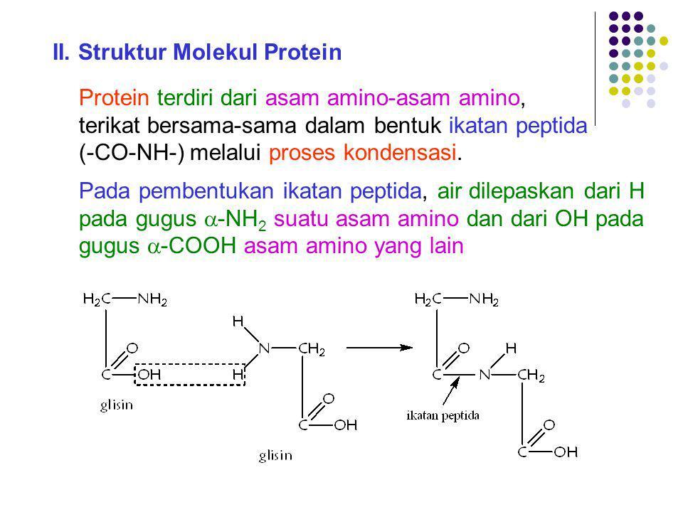 II. Struktur Molekul Protein