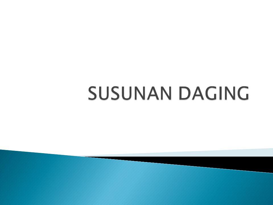SUSUNAN DAGING