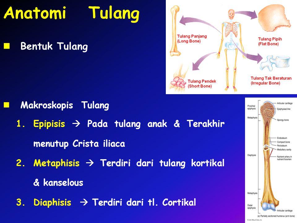 Anatomi Tulang Bentuk Tulang Makroskopis Tulang