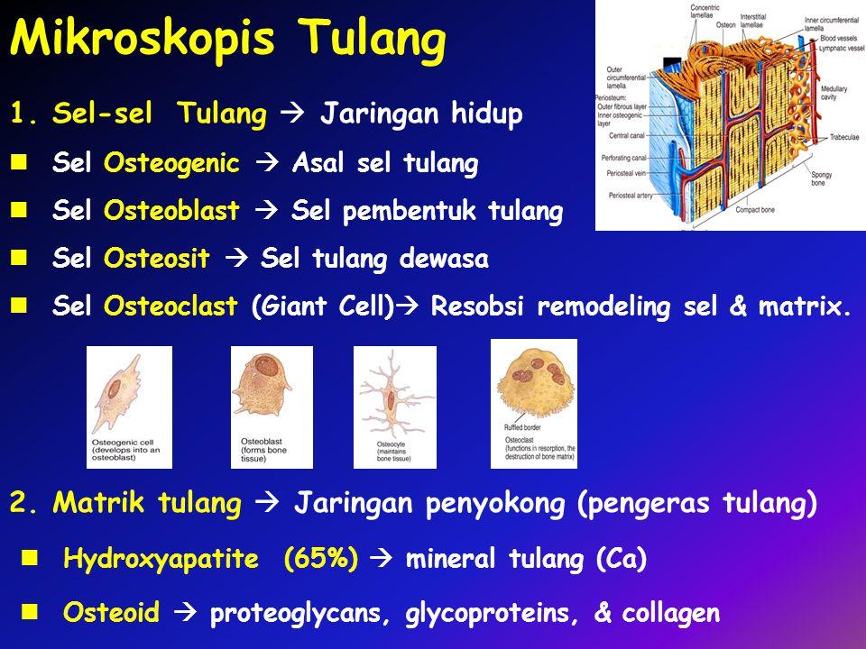 Mikroskopis Tulang Sel-sel Tulang  Jaringan hidup