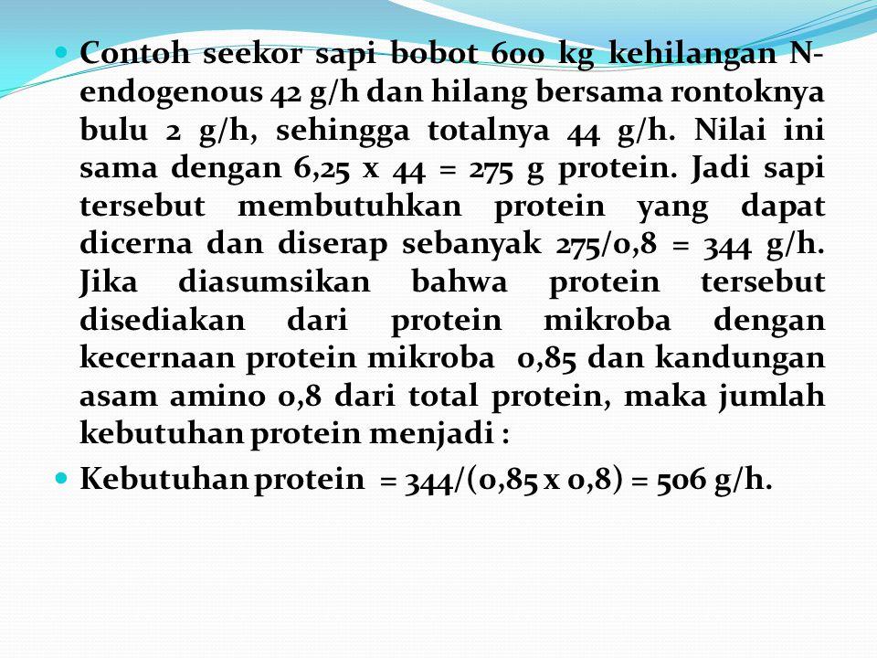 Contoh seekor sapi bobot 600 kg kehilangan N-endogenous 42 g/h dan hilang bersama rontoknya bulu 2 g/h, sehingga totalnya 44 g/h. Nilai ini sama dengan 6,25 x 44 = 275 g protein. Jadi sapi tersebut membutuhkan protein yang dapat dicerna dan diserap sebanyak 275/0,8 = 344 g/h. Jika diasumsikan bahwa protein tersebut disediakan dari protein mikroba dengan kecernaan protein mikroba 0,85 dan kandungan asam amino 0,8 dari total protein, maka jumlah kebutuhan protein menjadi :