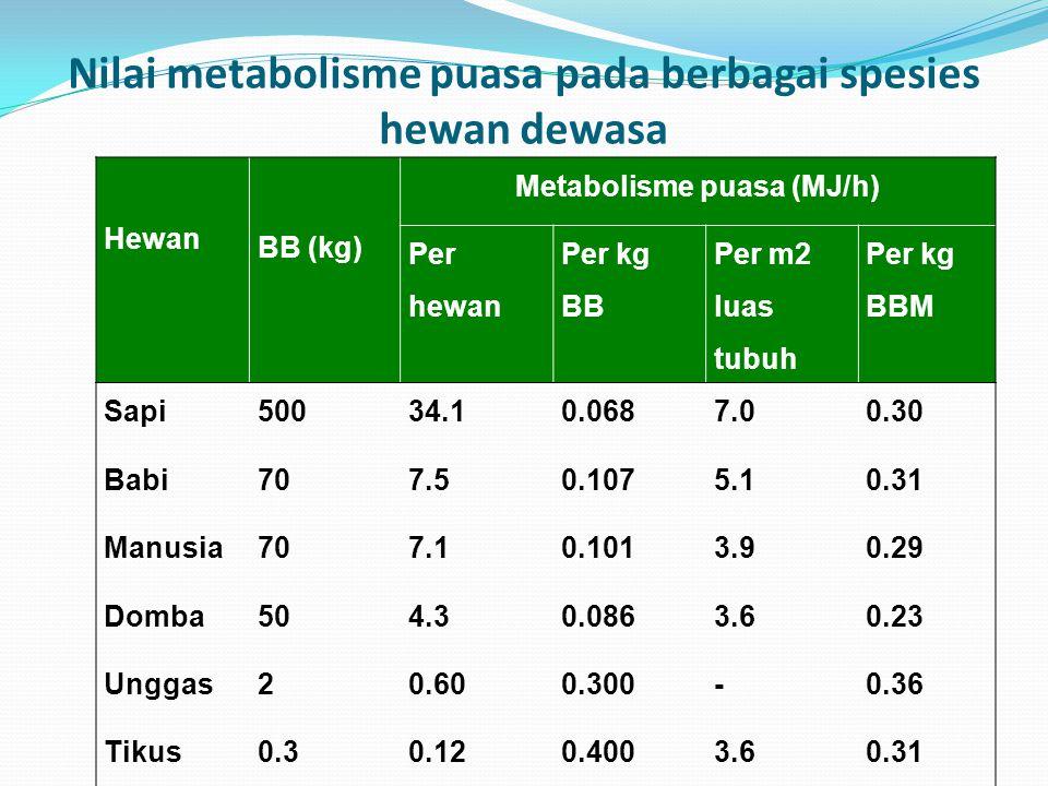 Nilai metabolisme puasa pada berbagai spesies hewan dewasa
