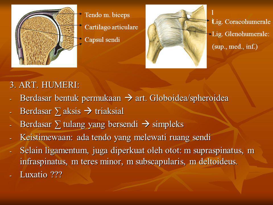 Berdasar bentuk permukaan  art. Globoidea/spheroidea