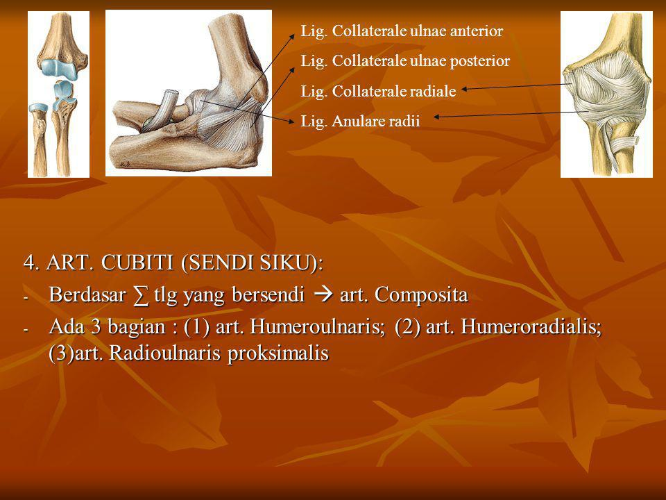 4. ART. CUBITI (SENDI SIKU):