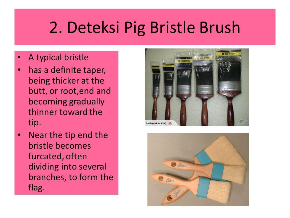 2. Deteksi Pig Bristle Brush