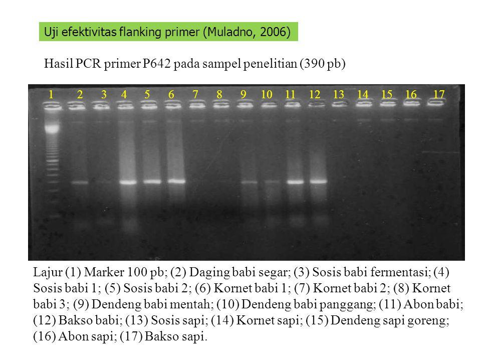 Hasil PCR primer P642 pada sampel penelitian (390 pb)