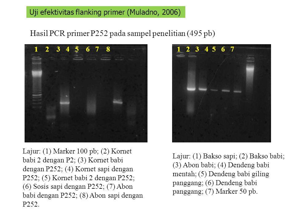 Hasil PCR primer P252 pada sampel penelitian (495 pb)