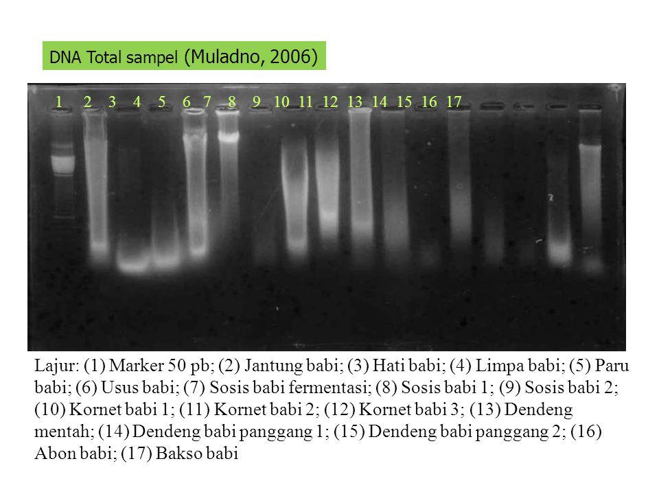 DNA Total sampel (Muladno, 2006)