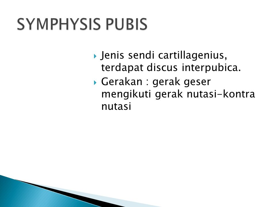 SYMPHYSIS PUBIS Jenis sendi cartillagenius, terdapat discus interpubica.
