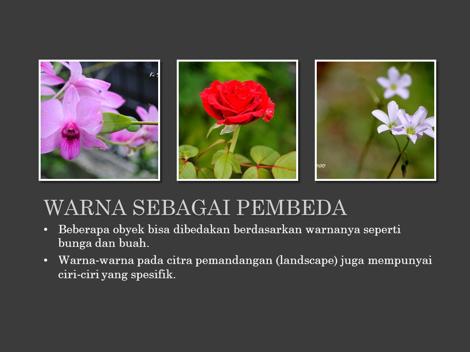 Warna sebagai pembeda Beberapa obyek bisa dibedakan berdasarkan warnanya seperti bunga dan buah.