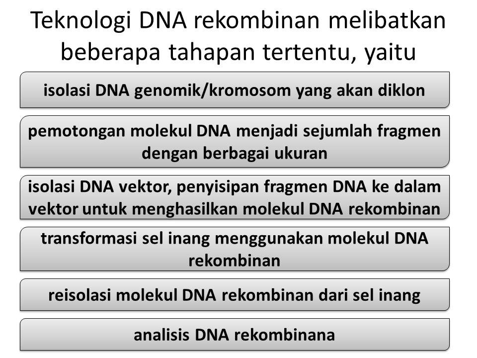 Teknologi DNA rekombinan melibatkan beberapa tahapan tertentu, yaitu