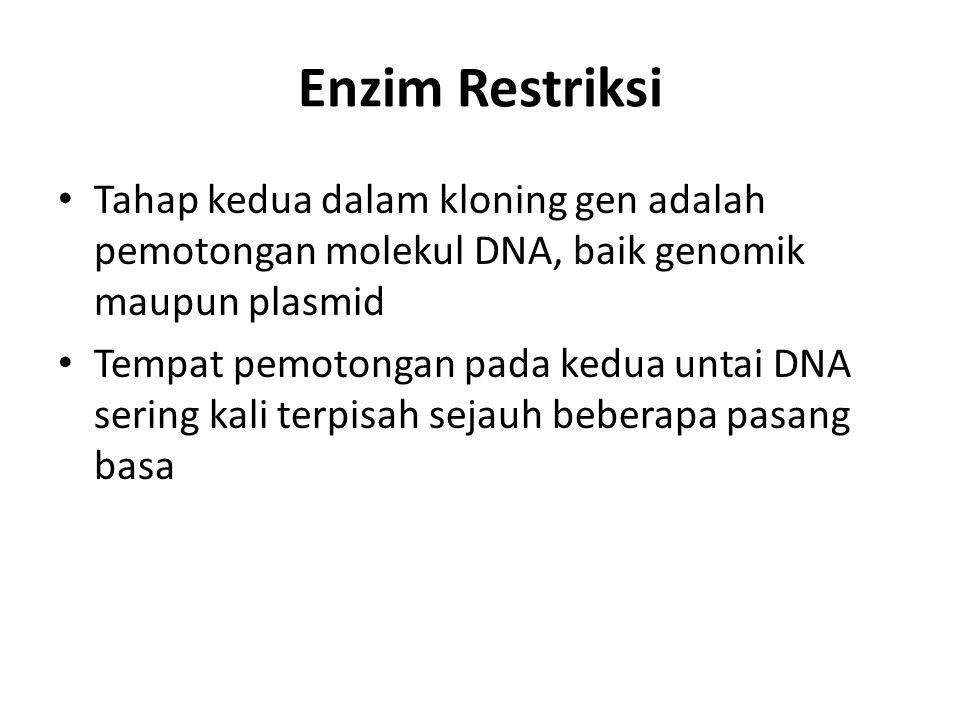 Enzim Restriksi Tahap kedua dalam kloning gen adalah pemotongan molekul DNA, baik genomik maupun plasmid.