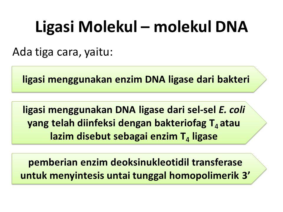 Ligasi Molekul – molekul DNA