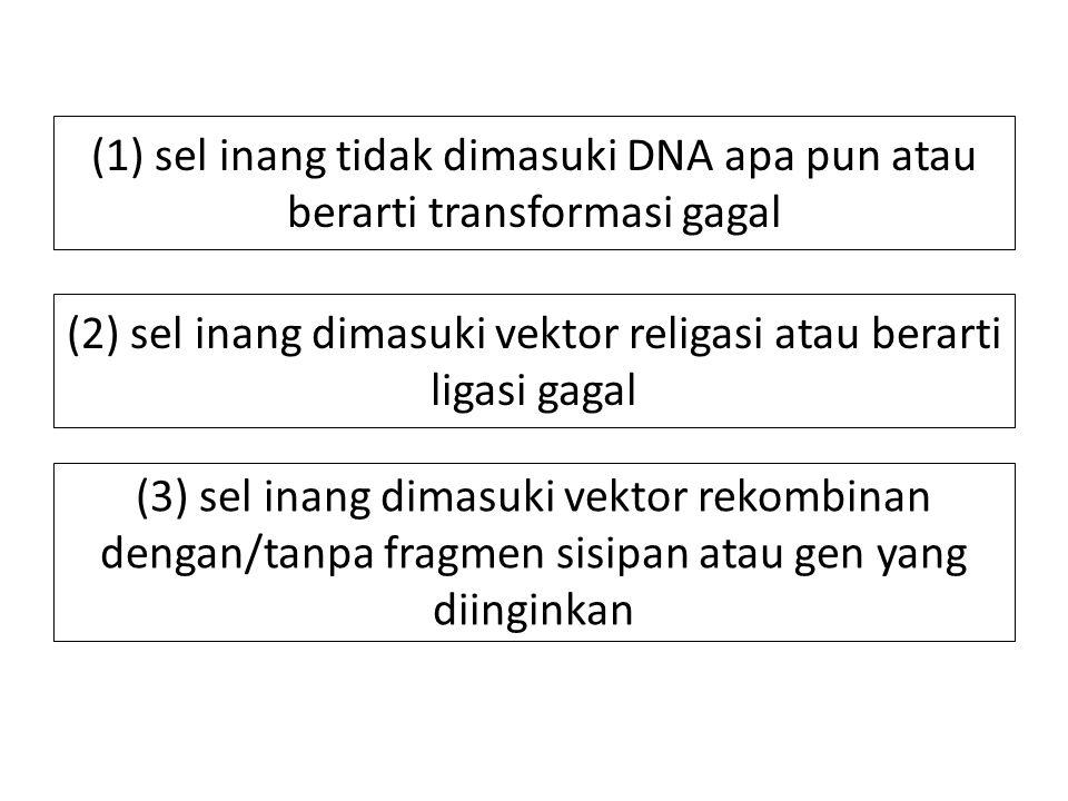 (2) sel inang dimasuki vektor religasi atau berarti ligasi gagal