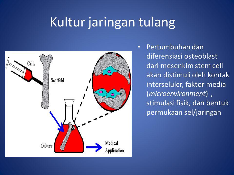 Kultur jaringan tulang