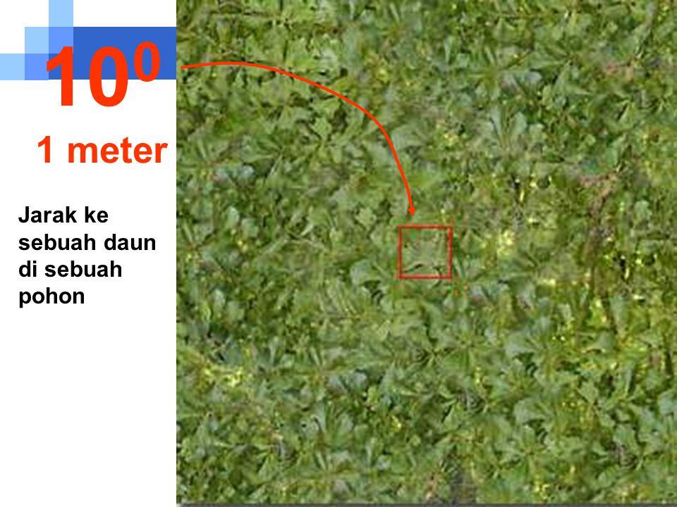 100 1 meter Jarak ke sebuah daun di sebuah pohon