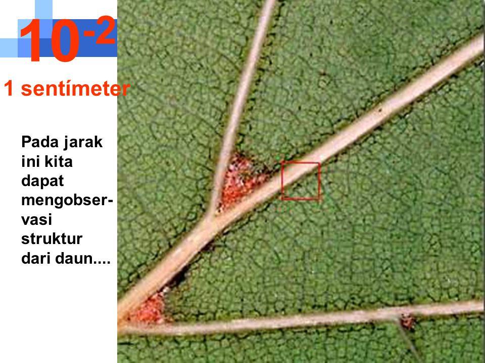 10-2 1 sentímeter Pada jarak ini kita dapat mengobser- vasi struktur dari daun....
