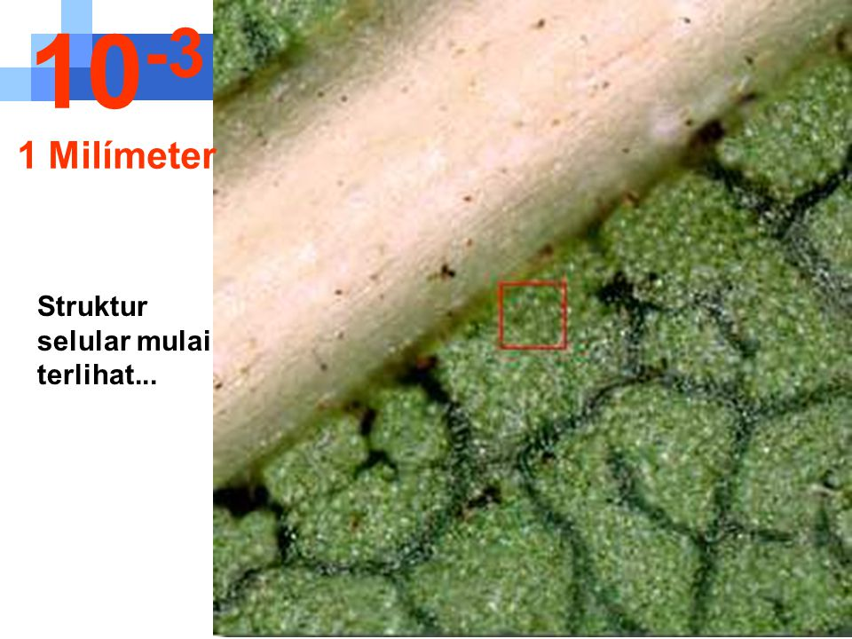 10-3 1 Milímeter Struktur selular mulai terlihat...