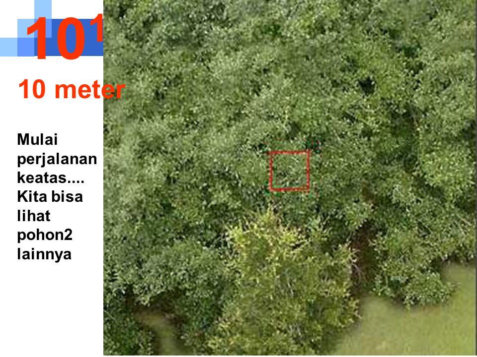 101 10 meter Mulai perjalanan keatas.... Kita bisa lihat pohon2 lainnya