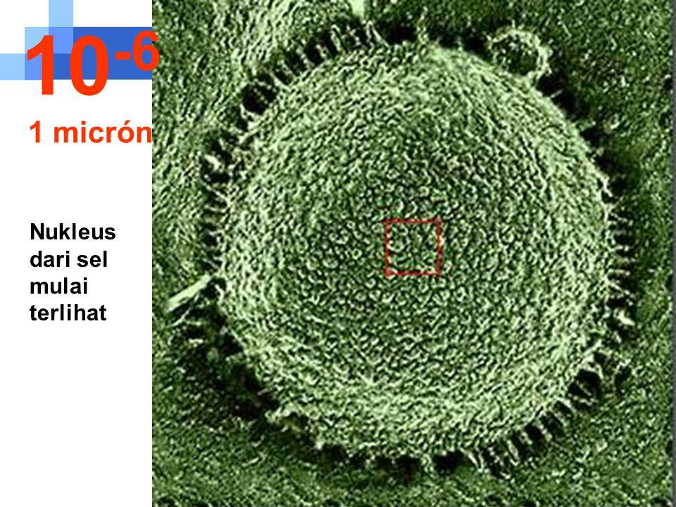 10-6 1 micrón Nukleus dari sel mulai terlihat