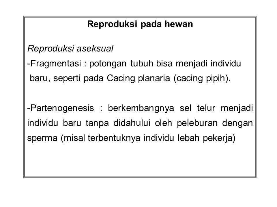 Reproduksi pada hewan Reproduksi aseksual. Fragmentasi : potongan tubuh bisa menjadi individu. baru, seperti pada Cacing planaria (cacing pipih).
