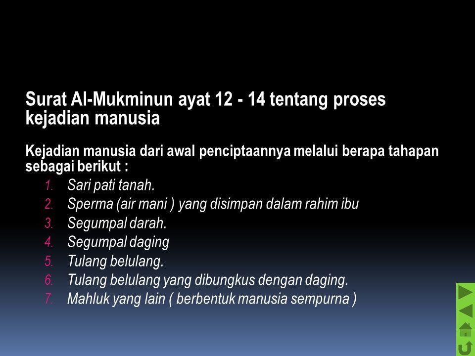 Surat Al-Mukminun ayat 12 - 14 tentang proses kejadian manusia