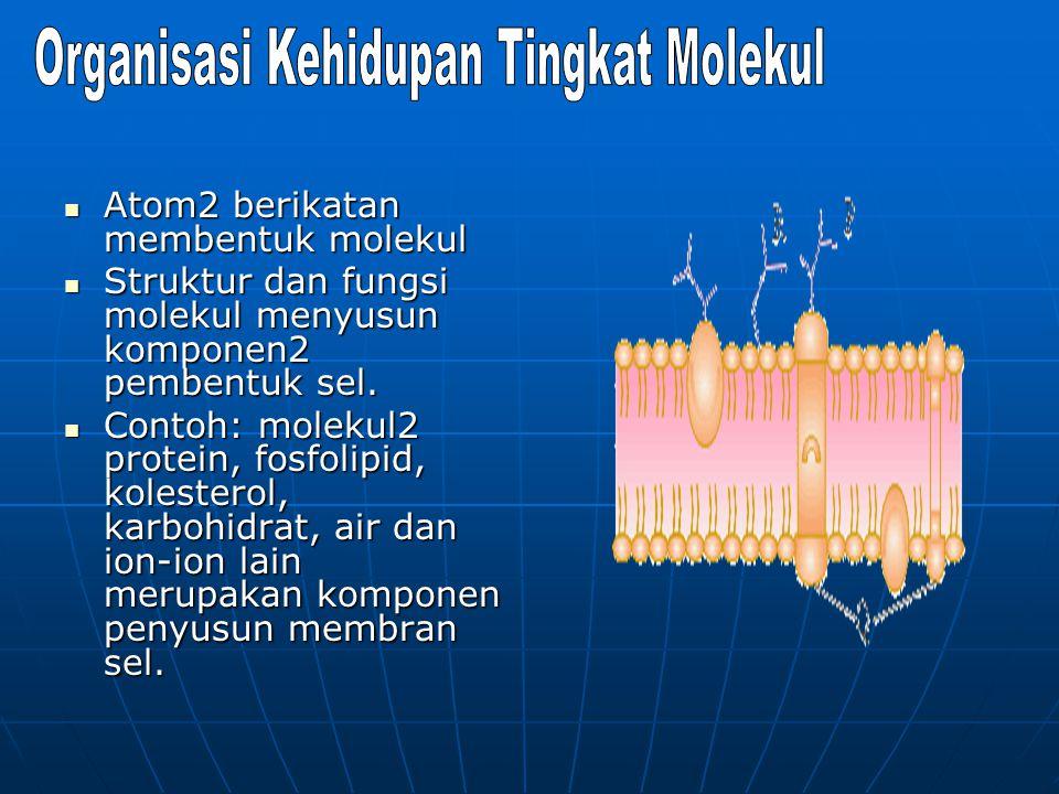 Organisasi Kehidupan Tingkat Molekul