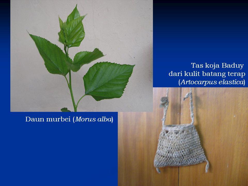 Tas koja Baduy dari kulit batang terap (Artocarpus elastica) Daun murbei (Morus alba)