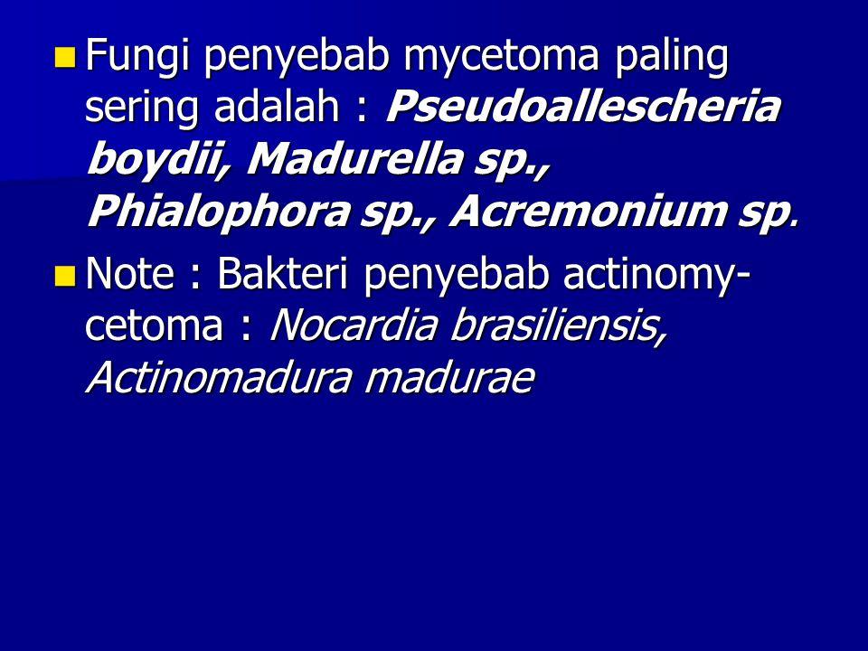 Fungi penyebab mycetoma paling sering adalah : Pseudoallescheria boydii, Madurella sp., Phialophora sp., Acremonium sp.