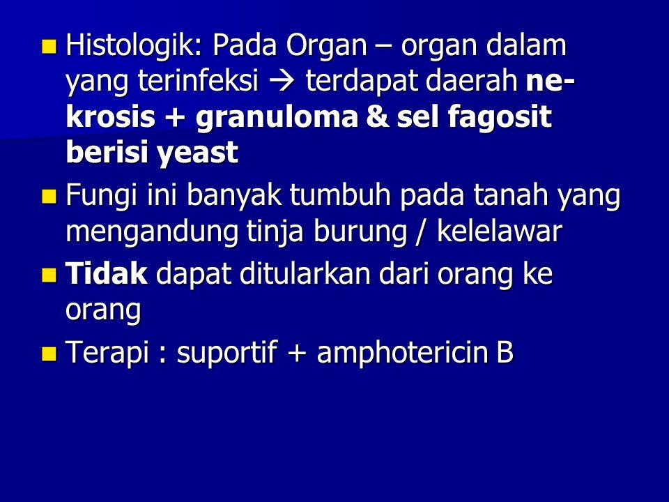 Histologik: Pada Organ – organ dalam yang terinfeksi  terdapat daerah ne-krosis + granuloma & sel fagosit berisi yeast