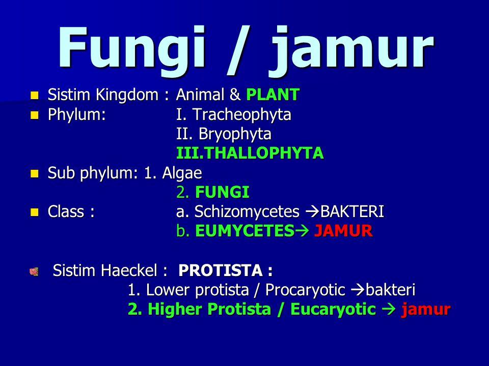 Fungi / jamur Sistim Kingdom : Animal & PLANT Phylum: I. Tracheophyta