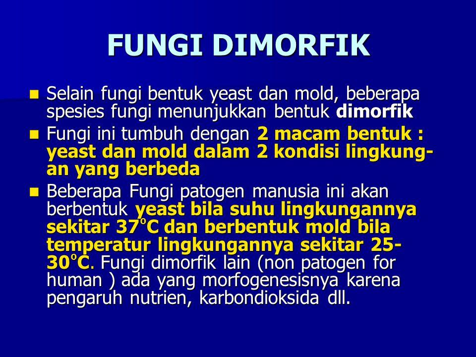 FUNGI DIMORFIK Selain fungi bentuk yeast dan mold, beberapa spesies fungi menunjukkan bentuk dimorfik.