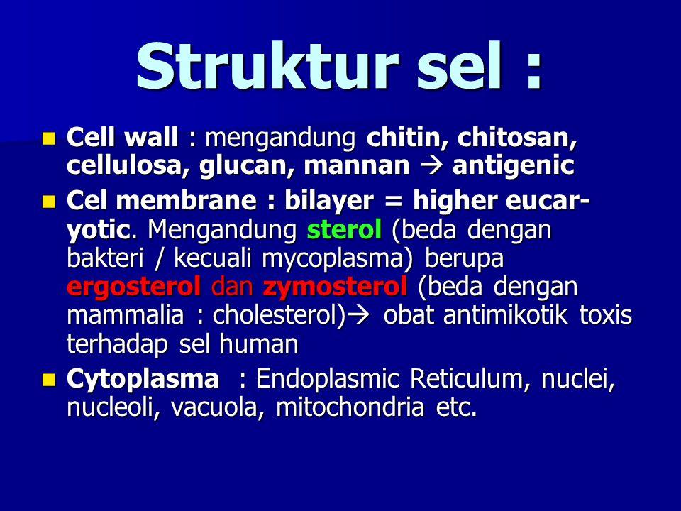 Struktur sel : Cell wall : mengandung chitin, chitosan, cellulosa, glucan, mannan  antigenic.