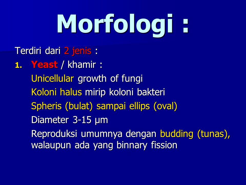 Morfologi : Terdiri dari 2 jenis : Yeast / khamir :