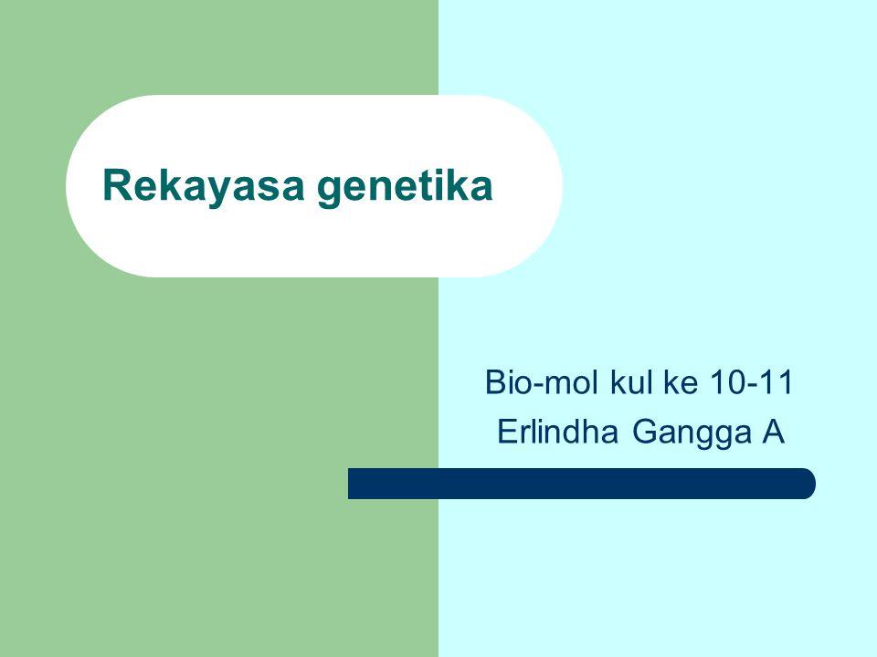 Bio-mol kul ke 10-11 Erlindha Gangga A